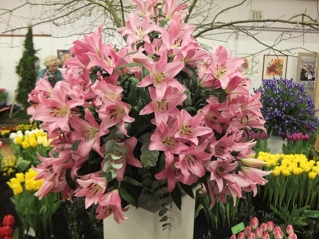 Roze lelies op Flora in Bovenkarspel