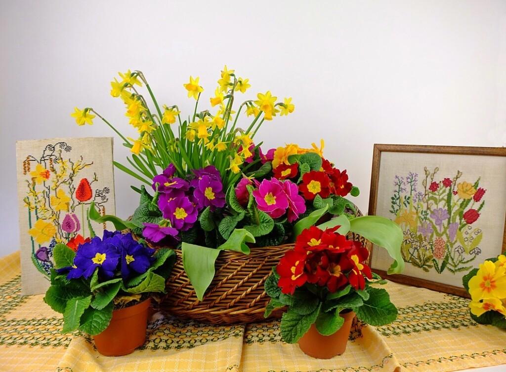 Primula's en geborduurde schilderijtjes voorjarasbloemen