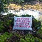 Tulpenkussen in bos