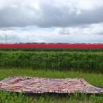 Gehaakte deken voor rood bollenveld