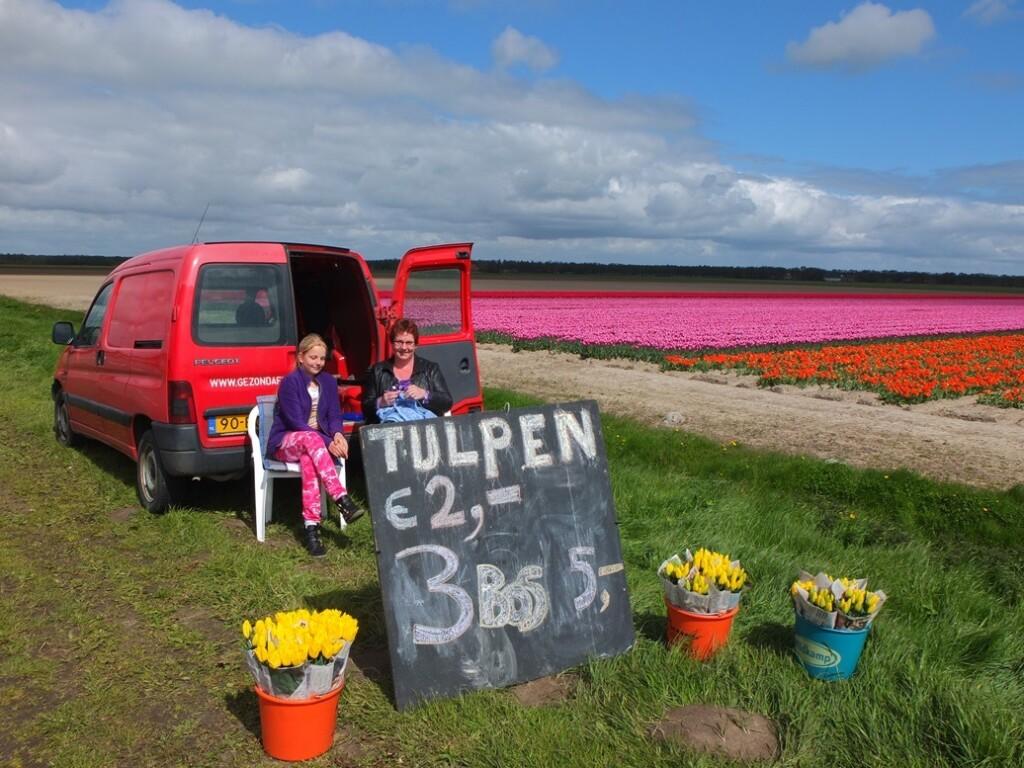Tulpenverkoop langs bollenvelden