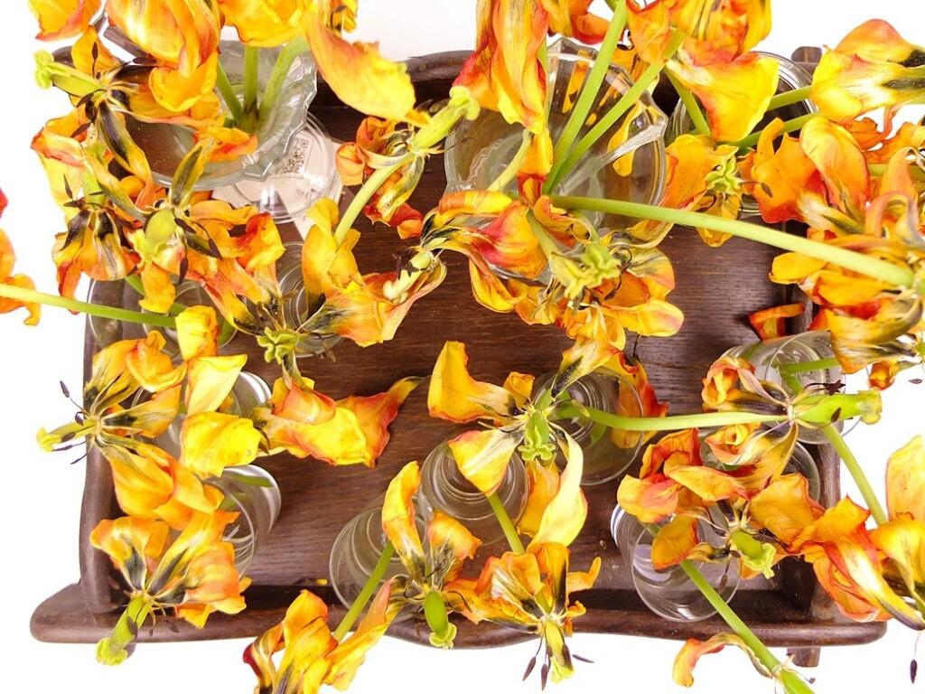 Houten dienblad met uitgebloeide tulpen