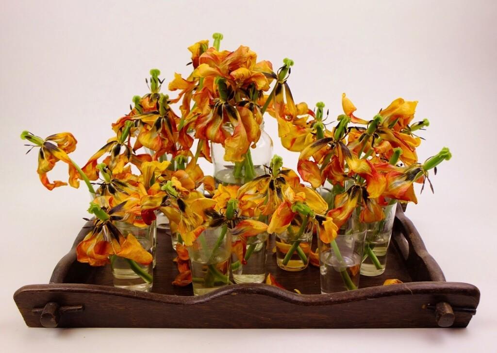 Uitgebloeide gele tulpen op houten dienblad
