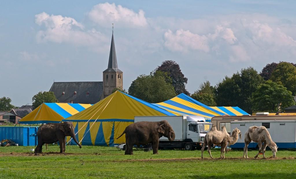 Circus langs de weg