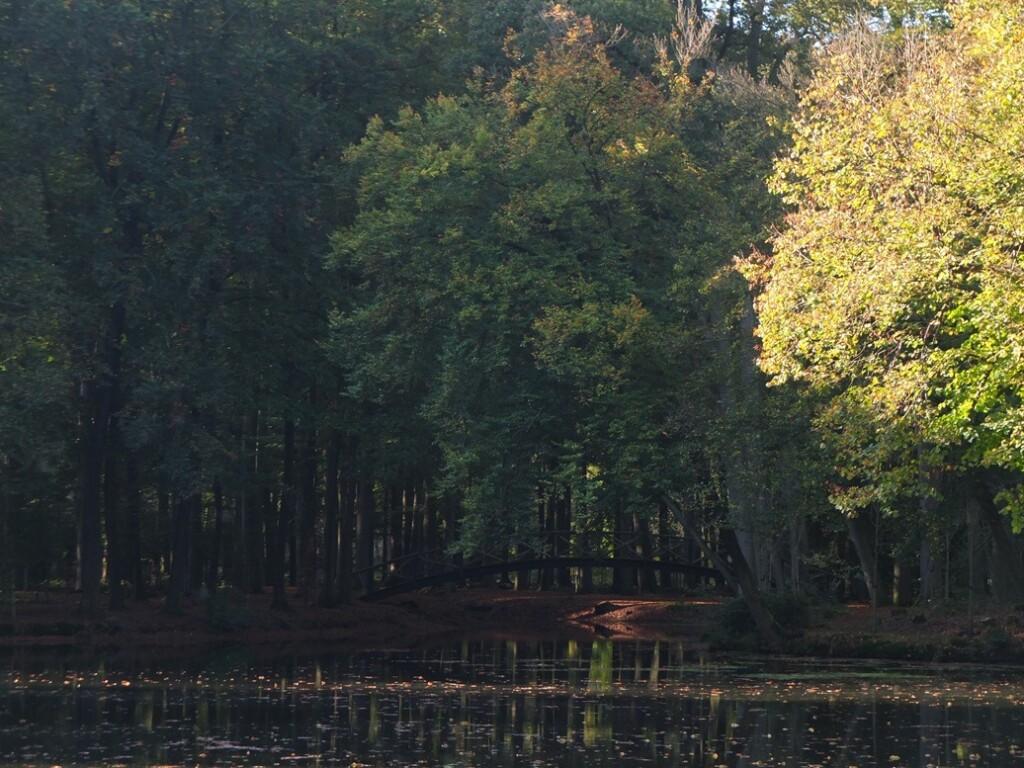 Donker bos bij Voorstonden
