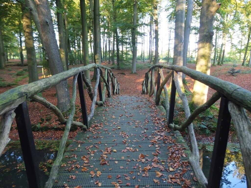 Bruggetje in bos bij Voorstonden