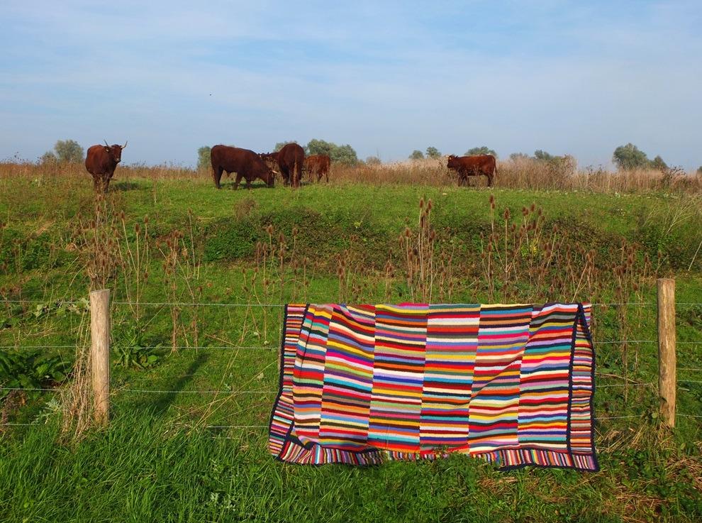 Gehaakte deken over hek bij brandrode runderen