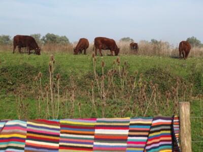 Gehaakte deken over hek bij runderen