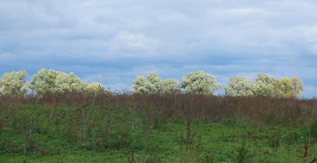 Wit licht op bomen langs Waal bij Staartjesdijk
