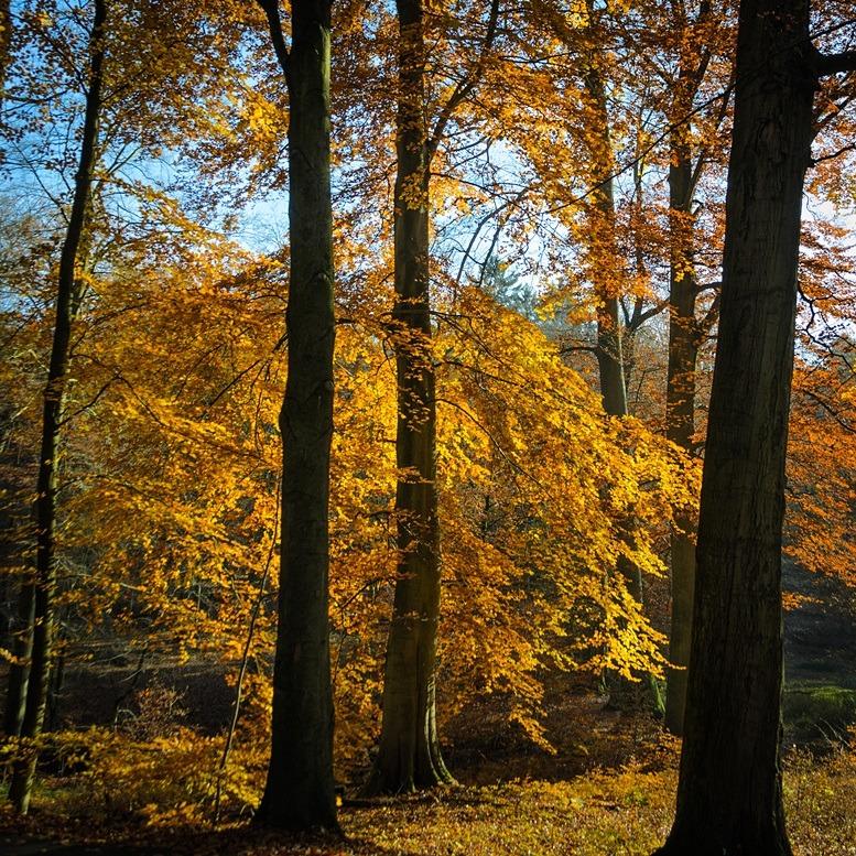 Herfst bomen