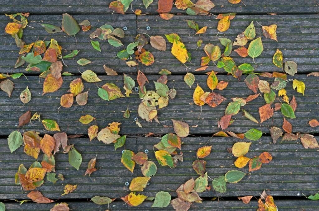 Berkeblaadjes aan het begin van de herfst