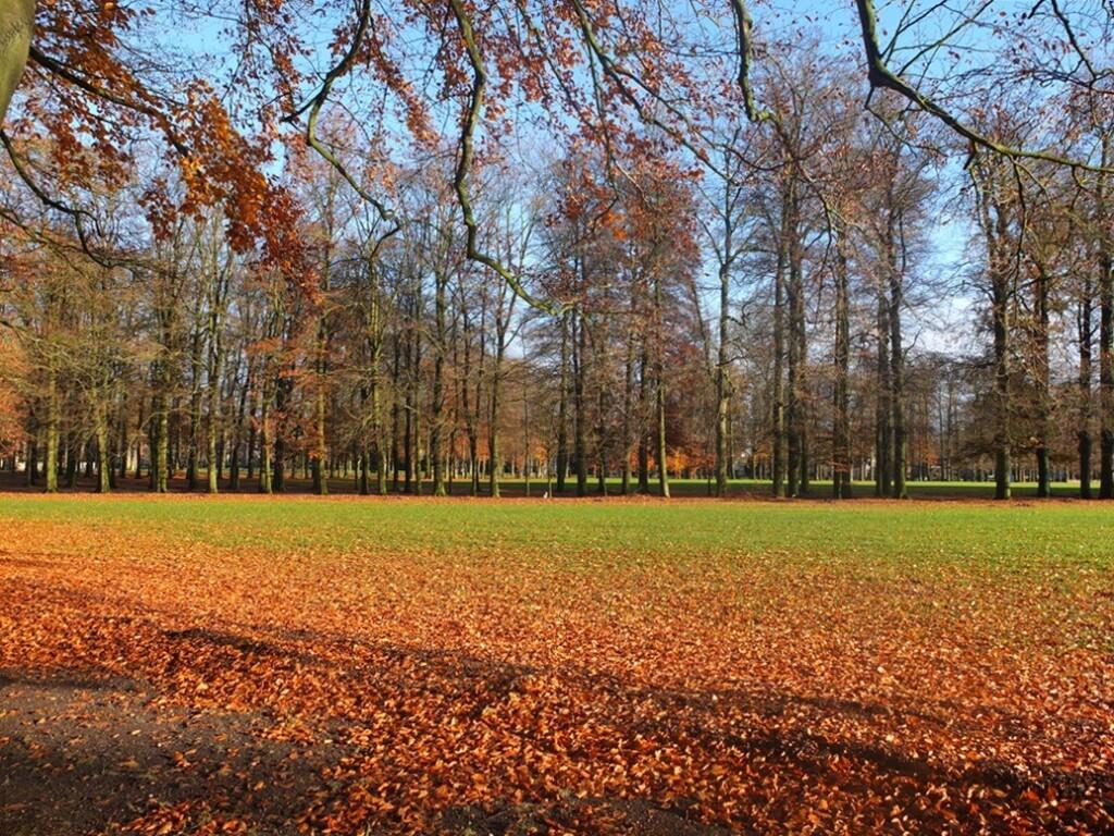 Park met herfstblad