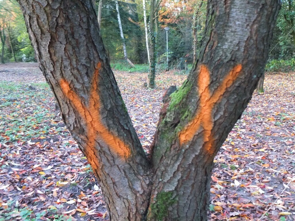 Twee gemarkeerde bomen
