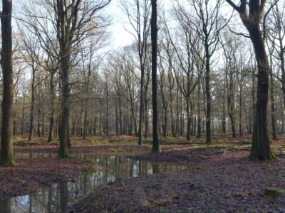 Winter in bos Kroondomeinen
