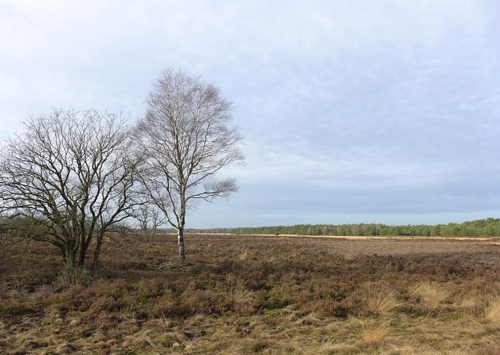 Hei bij Kootwijk vanaf grafheuvel