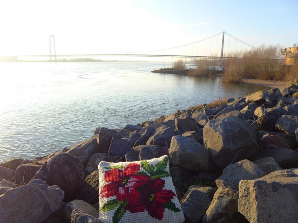 Kussen kerstroos bij brog over Rijn