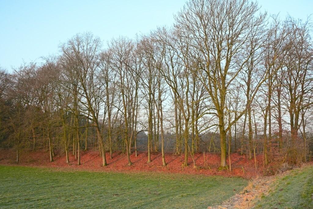 Zonlicht in februari op bomenrij