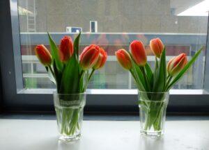 Tulpen in bierglazen