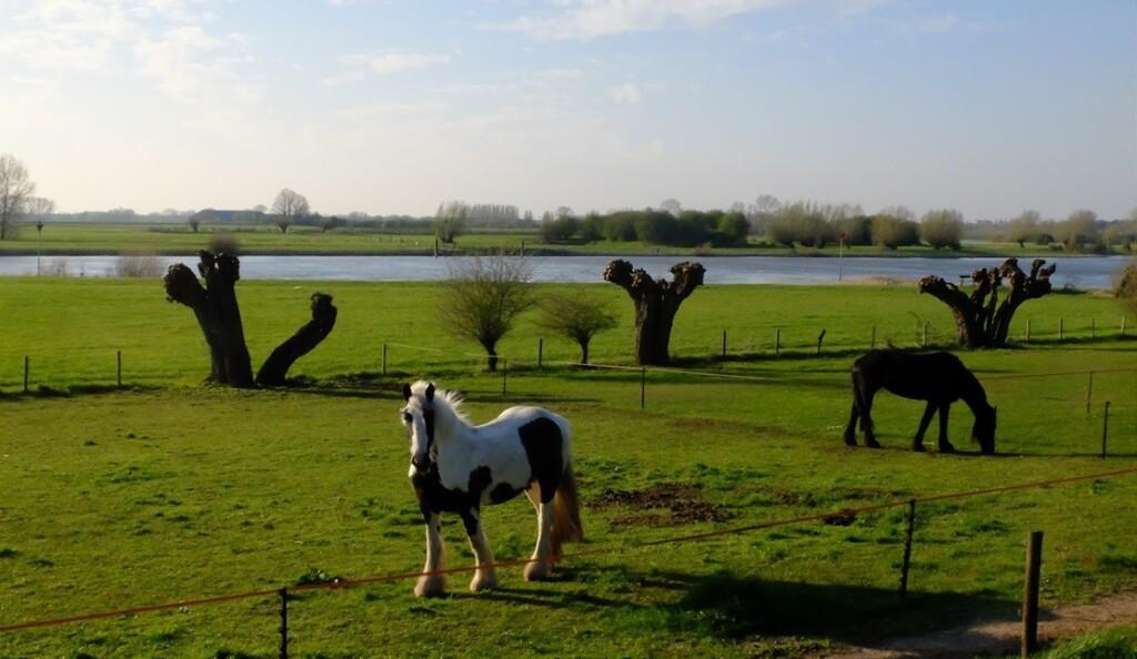 Twee paarden langs IJssel
