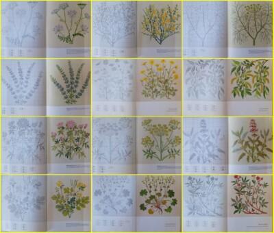 Collage geborduurde planten Gerda Bengtsson