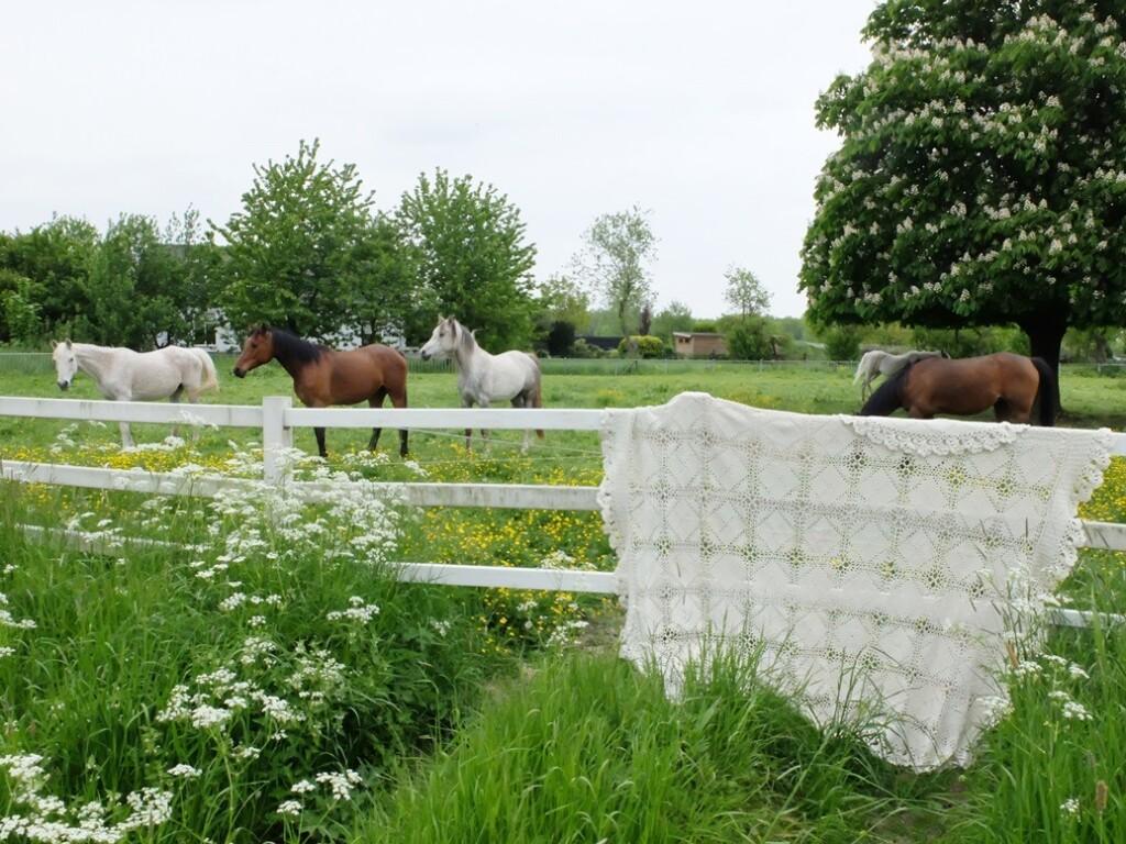 Gehaakte sprei bij paardenwei