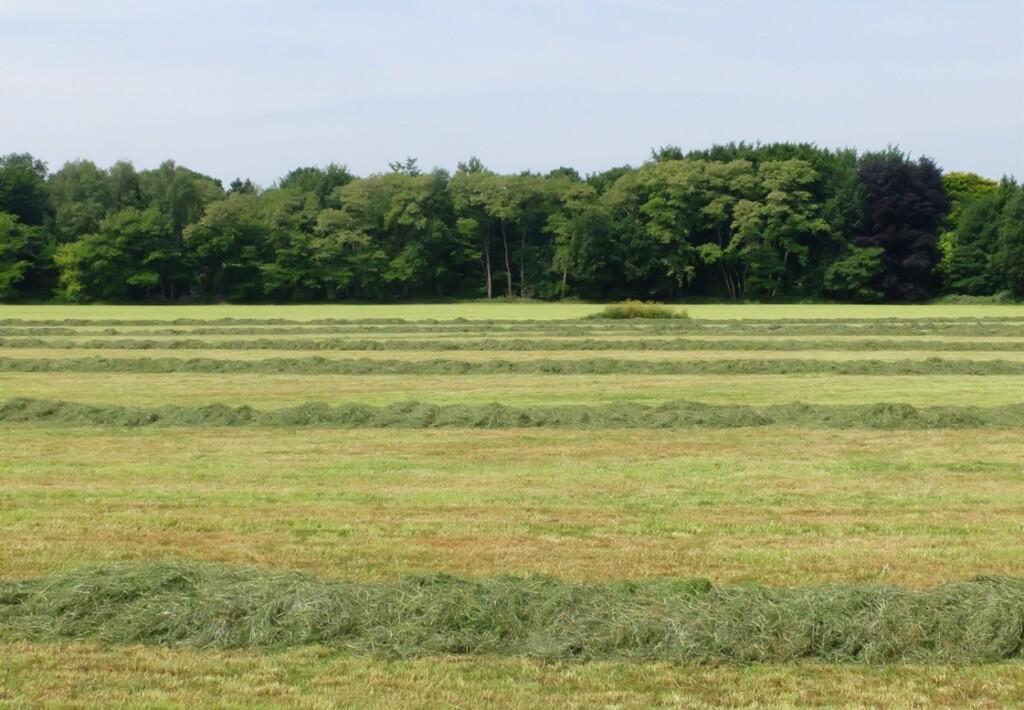 Grasland met hooi