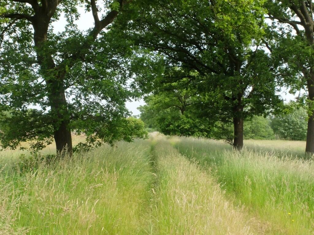 Weggetje begroeid met gras