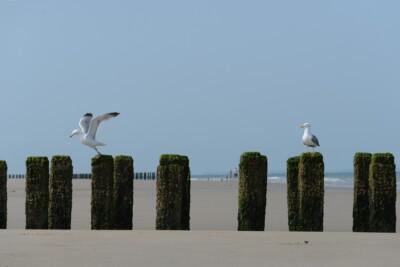 Wegvliegende zeemeeuw langs kust