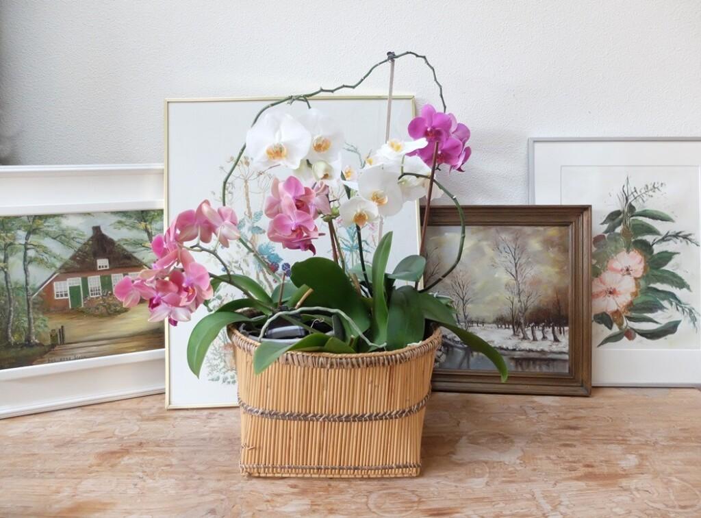 Schilderijen en orchideeën