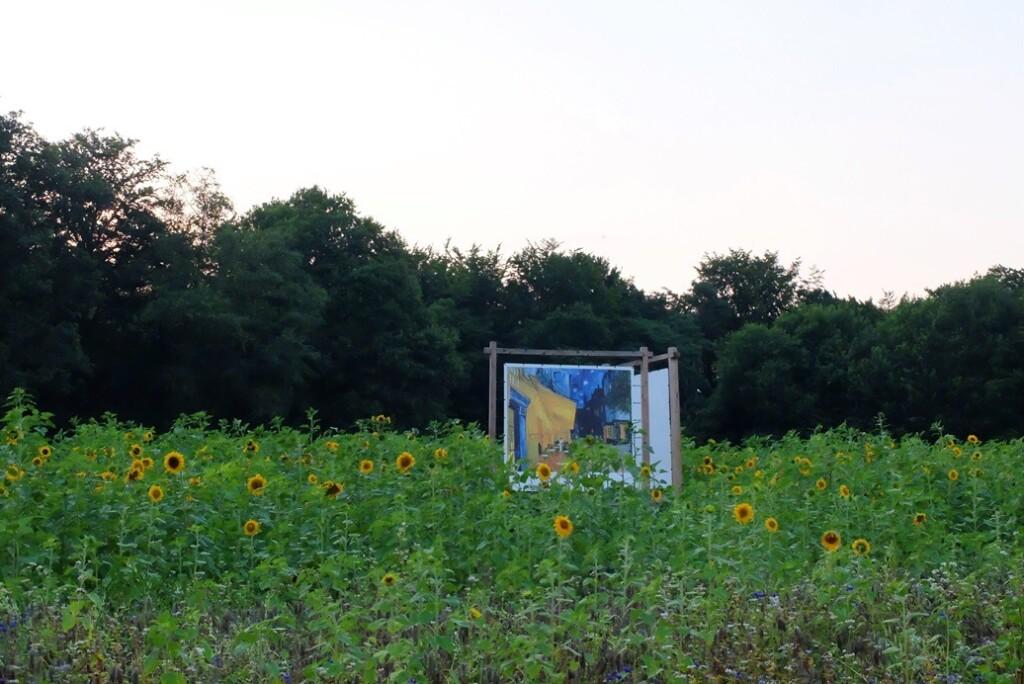Zonnebloemen bij ingang park Hoge Veluwe
