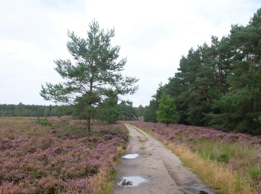 Heide bij Nierssen