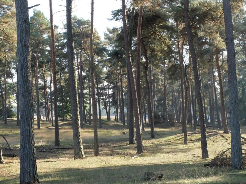 Bos in oktober