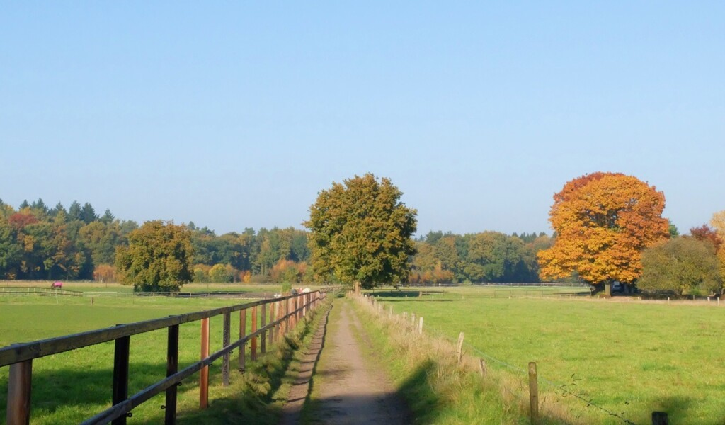 Landschap bij Wenum Wiesel