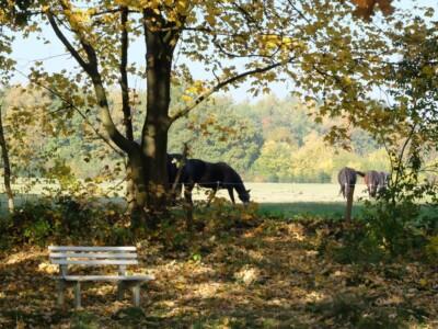Paarden in wei bij Wenum Wiesel