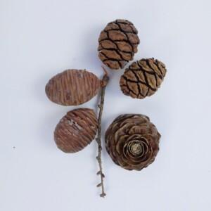 Sequoia kegels