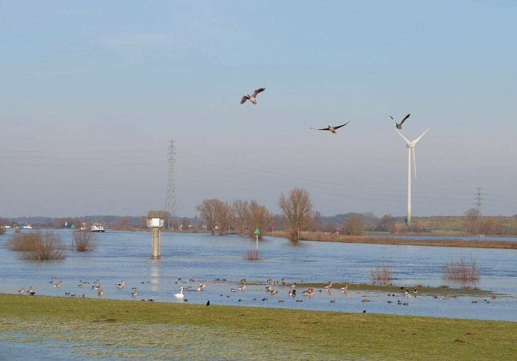 IJssel bij Zutphen in januari