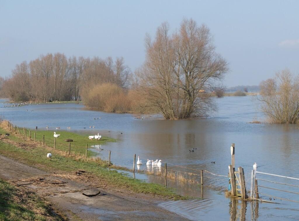 Hoog water langs- IJssel