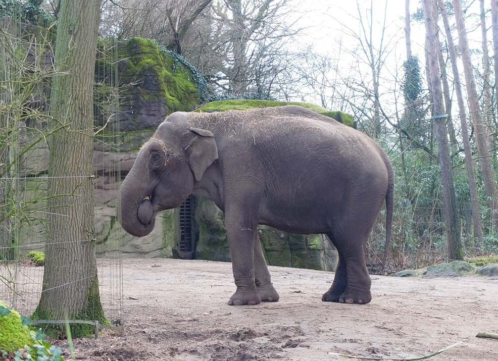 Olifant in Burgers Zoo