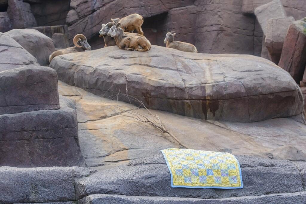 quiltje in desert burgers zoo