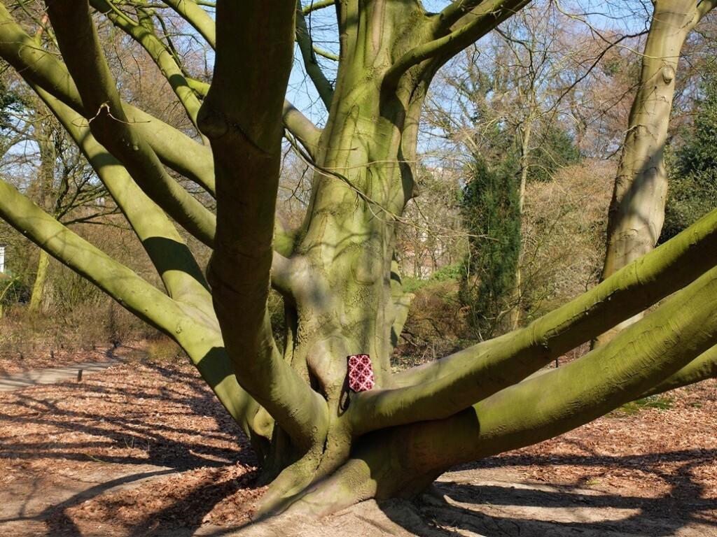 Boom in Arboretum Wageningen