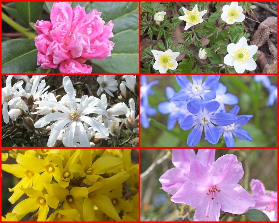 Foto collage voorjaarsbloei