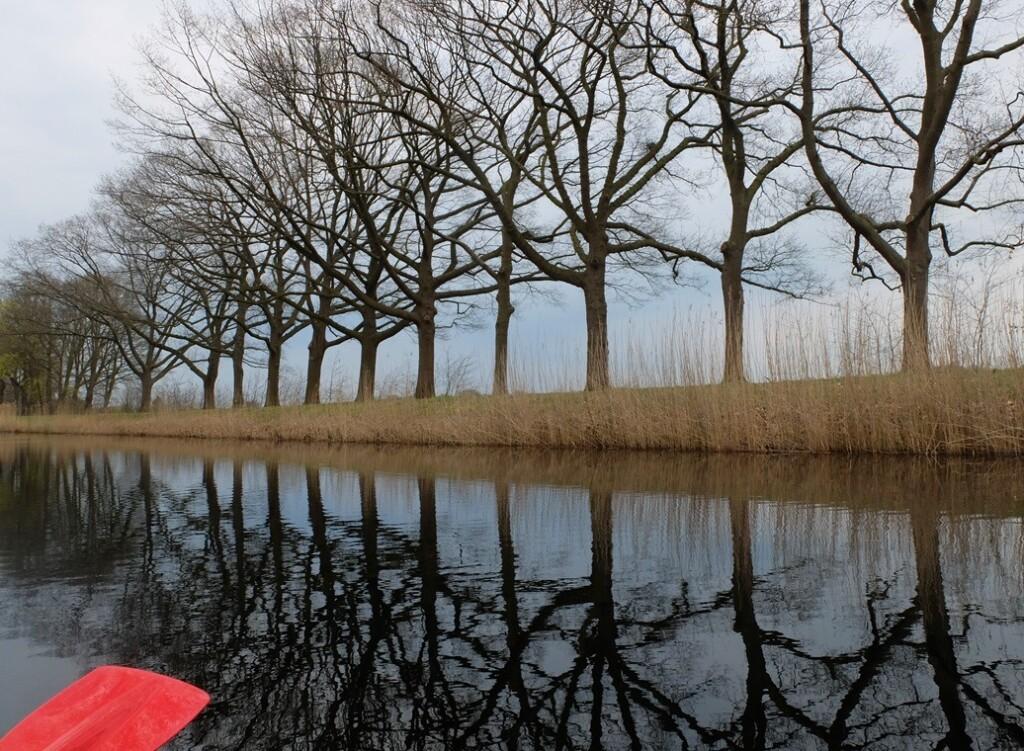 Weerspiegeling bomen in kanaal