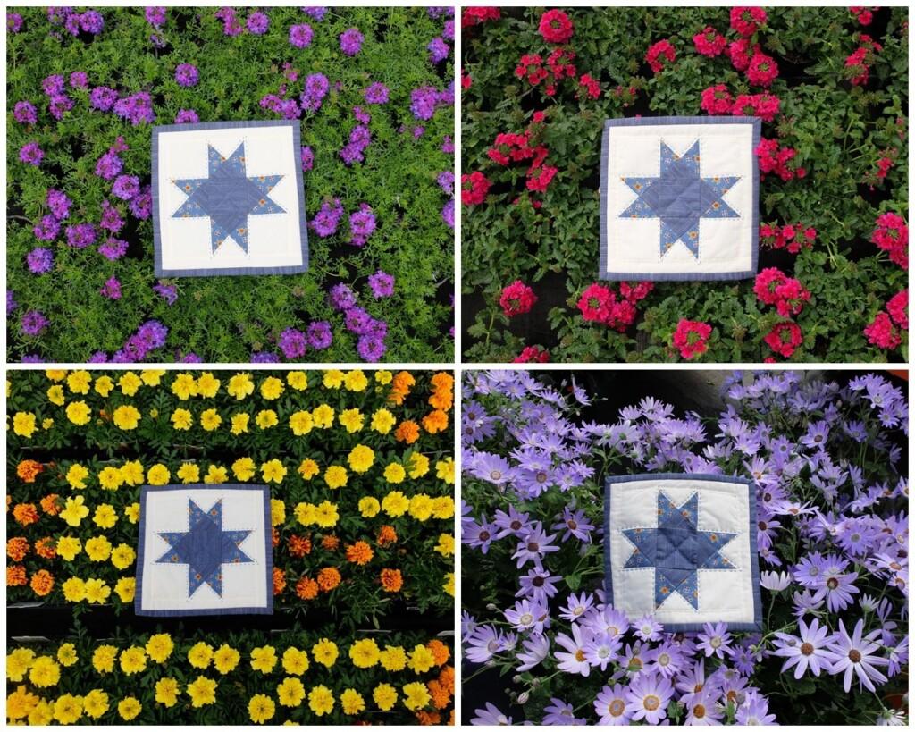 Ohio star op bloemen