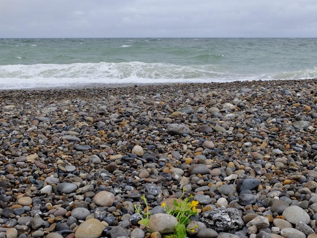Bloemen op strand