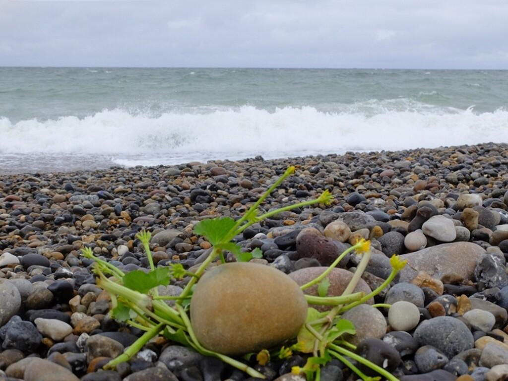 Stenen op strand