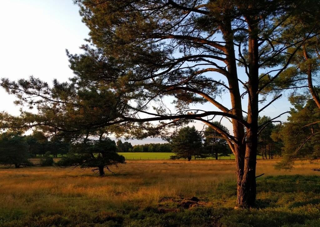 Bos bij Nierssen