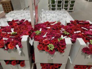 Bloemen bij Ikea