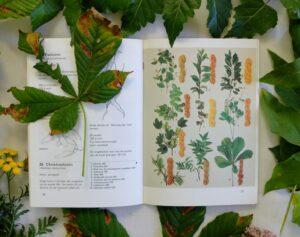 pagina uit boekje plantaardig verven