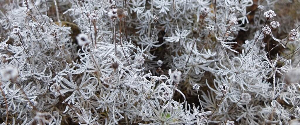 bevroren-bloemen