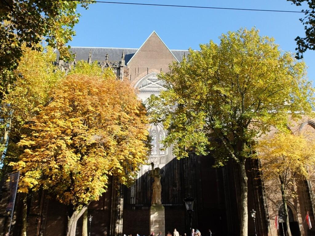 Herfstbomen voor Dom